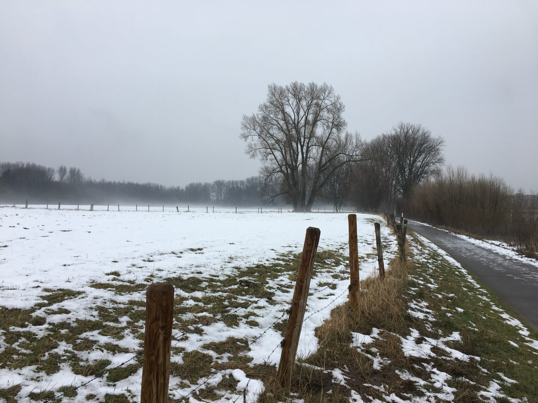 Im ländlich geprägtem Kölner Süden kann man im Weißer Bogen Natur sehen, die einerseits bewirtschaftet wird und als Weide für Kühe und Pferde dient, andererseits unberührte und sich ein selbst überlassenes Überflutungsgebiet des Rheins.