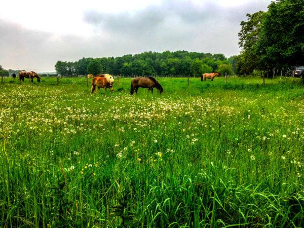 Pferde im Weißer Bogen